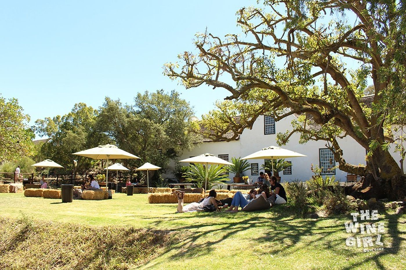 Groote Post Relaxed Tree Vibes