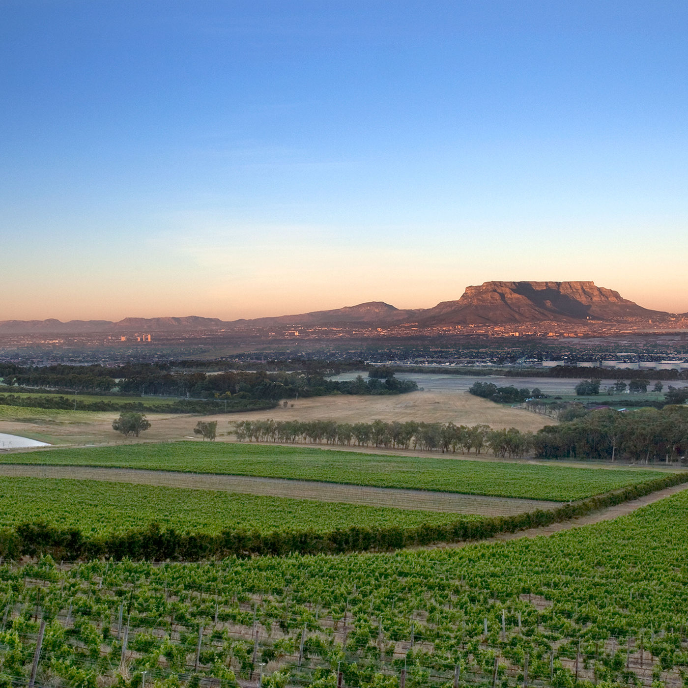 Durbanville Wine Route 2