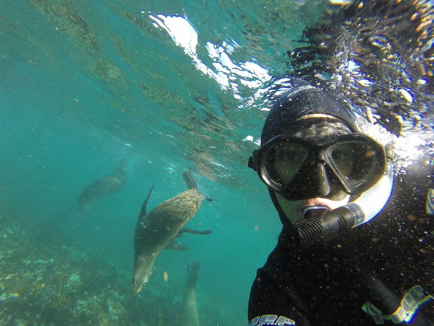 Snorkelwithseal Cape Town Bucket List