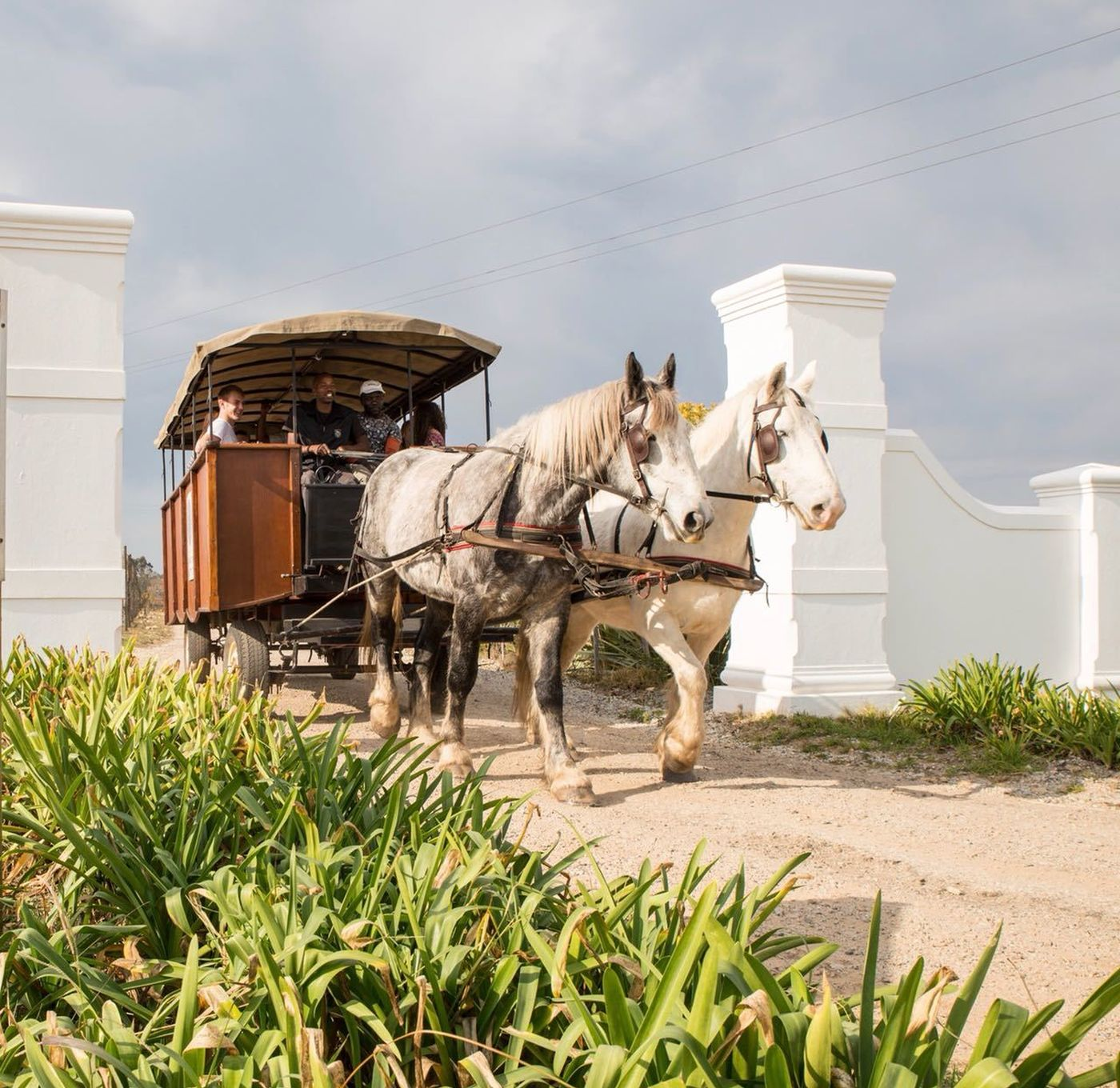 Plettenberg Bay Horse Drawn Carriage