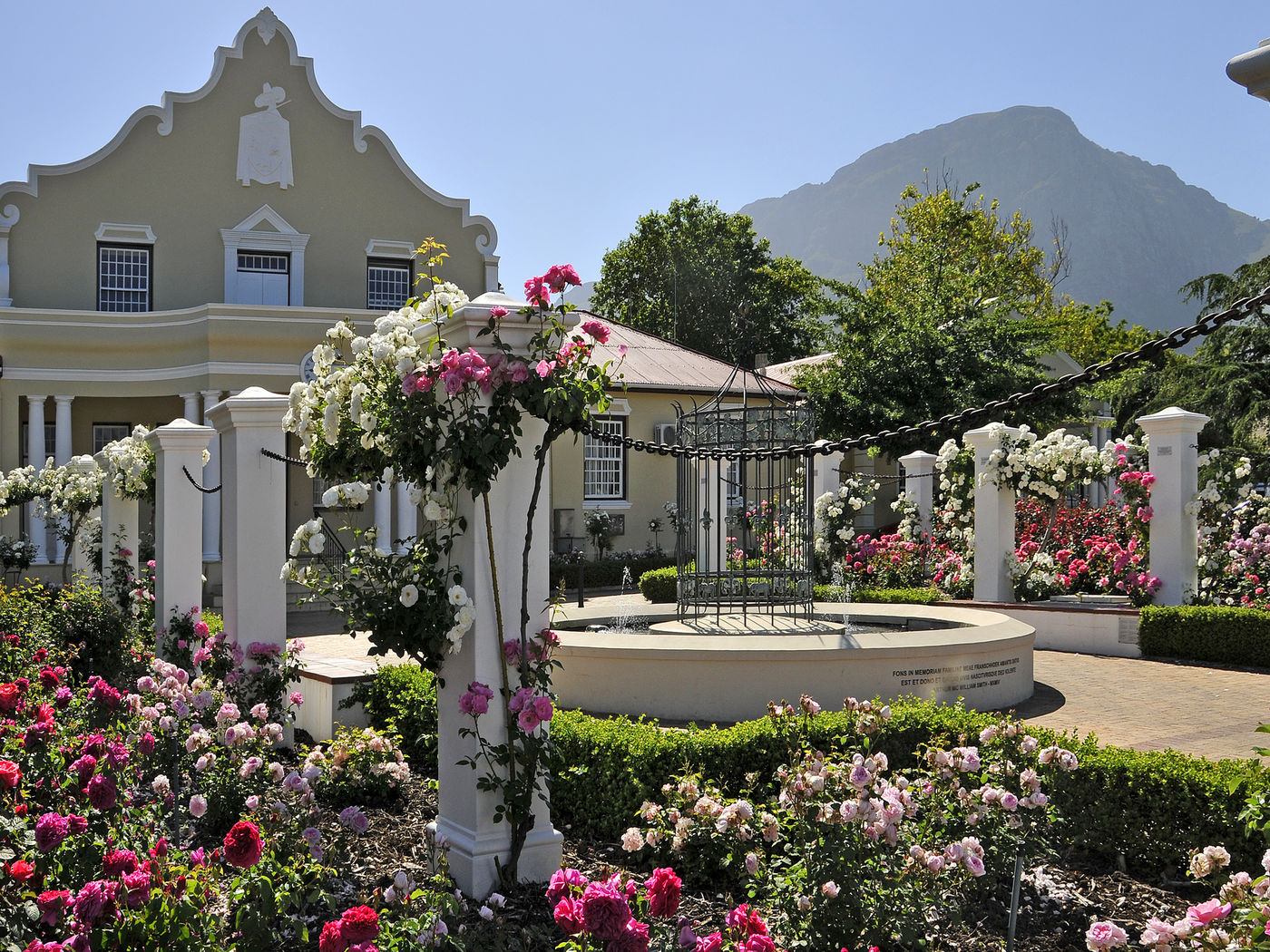 Franschhoek City Hall Roses 001