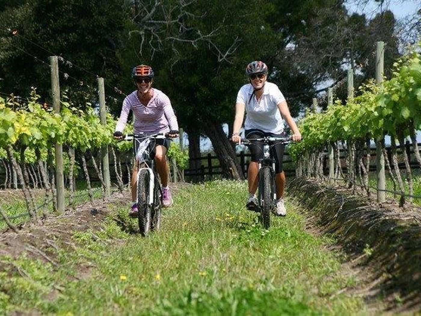 Cycling in the vines Plett